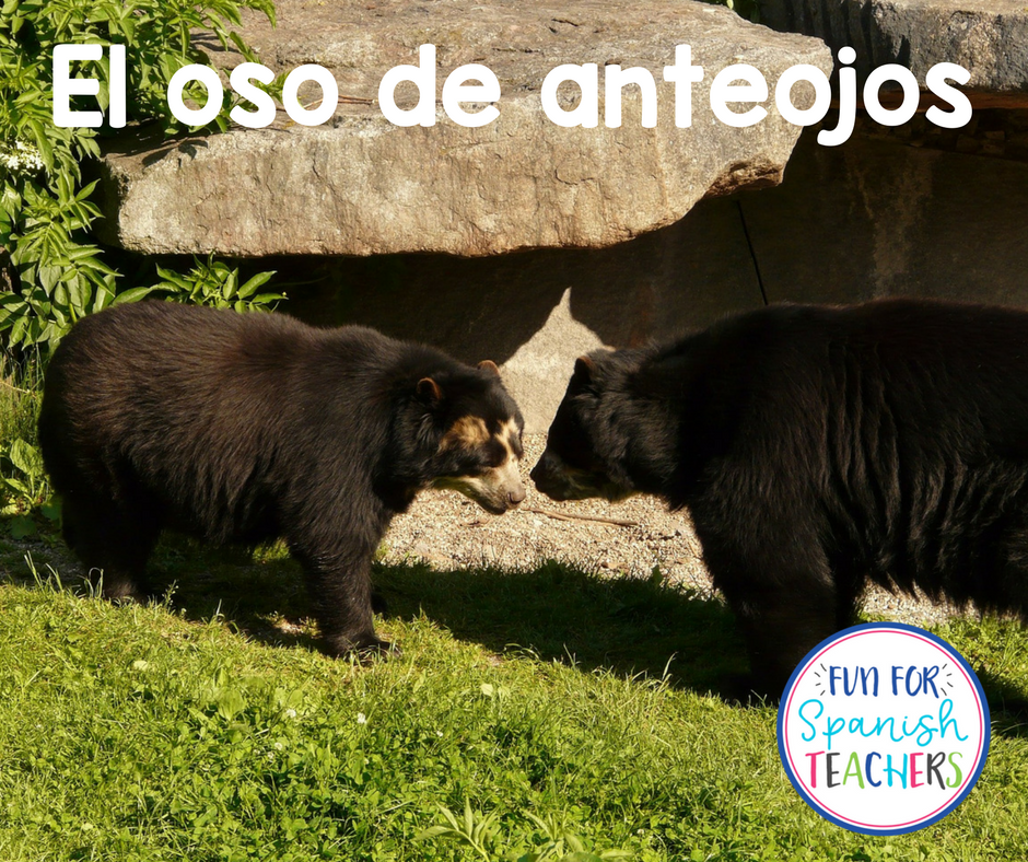 Raising Awareness to Protect the Spectacled Bear #PonteLosAnteojosPorLaVida