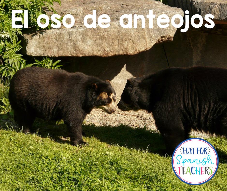 Raising Awareness to Protect the Spectacled Bear #PonteLosAnteojosPorLaVida
